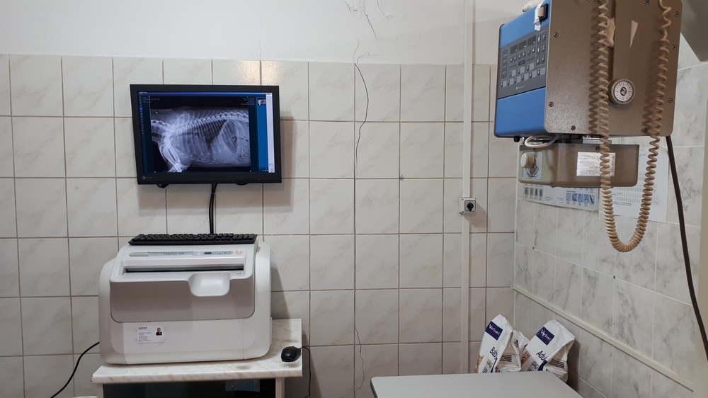 Állatorvosi Röntgenvizsgálat Ürömön