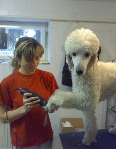 Kutyakozmetikus munkában