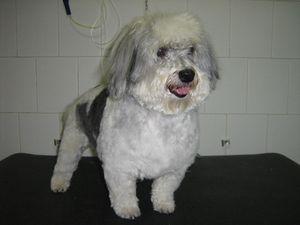 A kutyakozmetikából boldogan Pilisvörösvár Kutyakozmetika